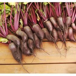 Salátová červená řepa Karkulka v Balení 50 semen