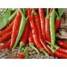 100 x semena Chilli Damián Zvýhodněná nabídka