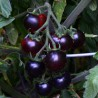 "Rajče Clackamas Blueberry "" 10 SEMEN"