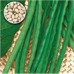 Fazol Dolico Dall´occhio Veneto - nano v Balení 30 semen