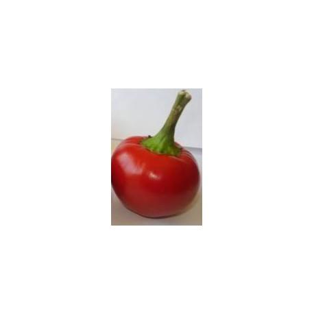 "Chilli paprička Caliegia "" 10 SEMEN"