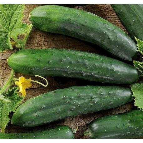"Okurka salátová ""hadovka"" Mezzo Lungo Marketmore v Balení 30 semen"