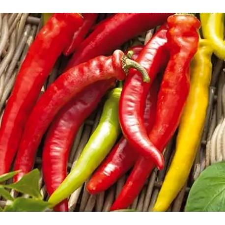 Paprika kozí roh Harriet v Balení 30 semen