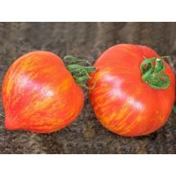 Rajče Kozula v balení 10 semen