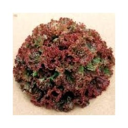"Salát Red Salad Bowl "" 500 SEMEN"