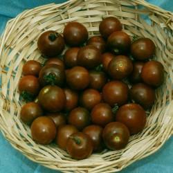 "Rajče Brown Berry "" 10 SEMEN"