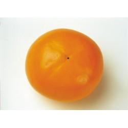 """Rajče Orange """" 20 SEMEN"""