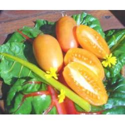 "Rajče Orange Banana "" 10 SEMEN"
