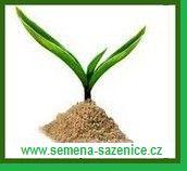 Semena-sazenice.cz